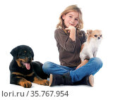 Young girl, rottweiler and chihuahua in front of white background. Стоковое фото, фотограф Zoonar.com/Emmanuelle BONZAMI / age Fotostock / Фотобанк Лори