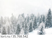 Winter landscape with mountain forest of snow covered trees. Стоковое фото, фотограф Zoonar.com/Ivan Mikhaylov / easy Fotostock / Фотобанк Лори
