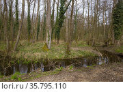 France, Région Grand Est, Bas Rhin (67), Aulnaie inondée entre Forstfeld... Стоковое фото, фотограф Morales / age Fotostock / Фотобанк Лори