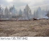Сжигание некондиционной древесины и порубочных остатков в вырубленном лесу. Стоковое фото, фотограф Бабкина Марина / Фотобанк Лори