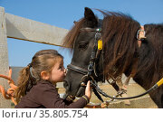 Little girl kissing her pony purebred shetland on the nose. Стоковое фото, фотограф Zoonar.com/BONZAMI Emmanuelle / age Fotostock / Фотобанк Лори