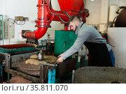 Man spreading milled olives on fiber disks to press. Стоковое фото, фотограф Яков Филимонов / Фотобанк Лори