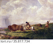 Colour photograph of the painting titled 'The Buffalo Chase' Редакционное фото, агентство World History Archive / Фотобанк Лори