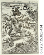 Seltener Stich Die Löwen Lyons published by Alain Manesson Mallet-Frankfurt 1686 A.D. Редакционное фото, агентство World History Archive / Фотобанк Лори