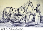 Currier & Ives Illustration 19th Century. A Correct Likeness of Mr H Rockwell's Horse Alexander, Bowery Amphitheatre, New York March 17, 1840. Редакционное фото, агентство World History Archive / Фотобанк Лори