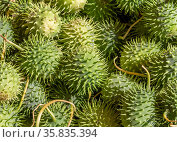 Full frame picture showing lots of green spiky gherkins. Стоковое фото, фотограф Zoonar.com/Achim Prill / easy Fotostock / Фотобанк Лори