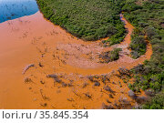 Aerial view of Lesser flamingo (Phoeniconaias minor) flock at mouth of a river full of sediment, Lake Bogoria, Kenya. Стоковое фото, фотограф Denis-Huot / Nature Picture Library / Фотобанк Лори