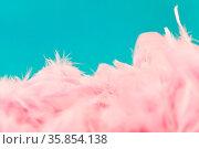 Viele rosa Federn als Hintergrund Header Textur vor blau. Стоковое фото, фотограф Zoonar.com/Robert Kneschke / age Fotostock / Фотобанк Лори