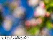 Abstract blur spring blossom background. Стоковое фото, фотограф Михаил Коханчиков / Фотобанк Лори