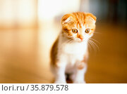 Cat. Стоковое фото, агентство Ingram Publishing / Фотобанк Лори