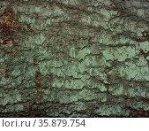 Wood bark texture. Стоковое фото, агентство Ingram Publishing / Фотобанк Лори
