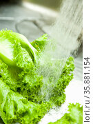 Lettuce. Стоковое фото, агентство Ingram Publishing / Фотобанк Лори