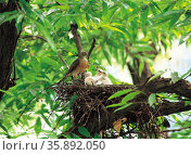 Birds nest. Стоковое фото, агентство Ingram Publishing / Фотобанк Лори