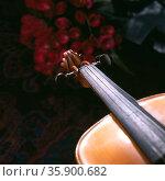 musical instrument. Стоковое фото, агентство Ingram Publishing / Фотобанк Лори
