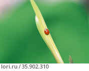 insect. Стоковое фото, агентство Ingram Publishing / Фотобанк Лори