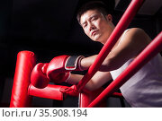Portrait of male boxer resting his elbows on the ring side, low angle view. Стоковое фото, агентство Ingram Publishing / Фотобанк Лори