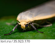 Close up of the Forest Moth on the leave of a shrub. Стоковое фото, фотограф Сергей Фролов / Фотобанк Лори