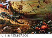 Sea Crabs and lobsters in: Das Meer by M. J. Schleiden; 1804-1881. Редакционное фото, агентство World History Archive / Фотобанк Лори