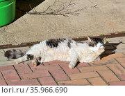 Кот лежит на тротуарной плитке и греется на весеннем солнце в задумчивой позе, подперев морду лапой. Стоковое фото, фотограф Владимир Литвинов / Фотобанк Лори