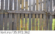 Old broken wooden fence on background of green meadow on summer day. Стоковое видео, видеограф Яков Филимонов / Фотобанк Лори