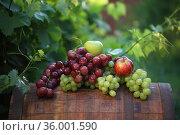 Грозди красного и белого винограда с яблоками на бочке в винограднике. Стоковое фото, фотограф Марина Володько / Фотобанк Лори