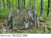 Сочи, Лазаревский район, частично разрушенный корытообразный дольмен в лесу. Стоковое фото, фотограф glokaya_kuzdra / Фотобанк Лори
