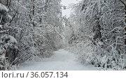 Заснеженный лес в ленинградской области под ярким солнцем. Стоковое фото, фотограф Андрей Атрощенко / Фотобанк Лори