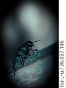 Horror background in thriller style, silhouette of a beetle in a strange scary mystical paranormal dangerous light, fear of insects beetles, arachnophobia, insectophobia and entomophobia. Стоковое фото, фотограф Светлана Евграфова / Фотобанк Лори