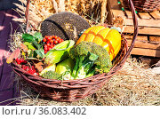 Agriculture harvested various colorful fresh vegetables. Thanksgiving... Стоковое фото, фотограф Zoonar.com/Alexander Blinov / easy Fotostock / Фотобанк Лори