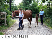 """Gestuet Graditz, groom brings mare and foal to the paddock"" (2020 год). Редакционное фото, агентство Caro Photoagency / Фотобанк Лори"