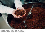 Coffee cooling in roaster machine at coffee roasting process. Young... Стоковое фото, фотограф Zoonar.com/Max / easy Fotostock / Фотобанк Лори