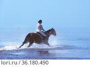 Riding a horse on the water. Speed. Freedom. Gallop. Joy. Редакционное фото, фотограф Филатова Ирина / Фотобанк Лори