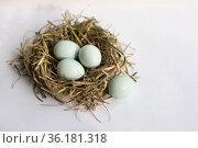 quail eggs in a nest. Стоковое фото, фотограф Типляшина Евгения / Фотобанк Лори