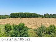 Ячменное поле. Стоковое фото, фотограф Мария Кылосова / Фотобанк Лори