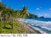 Rosalie Bay area on Atlantic side of Dominica, West Indies (Eastern Caribbean). Drone photo, November 2020. Стоковое фото, фотограф Derek Galon / Nature Picture Library / Фотобанк Лори