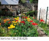Hinterhof, Garten, Altstadt, Idstein. Стоковое фото, фотограф Zoonar.com/Manfred Ruckszio / easy Fotostock / Фотобанк Лори