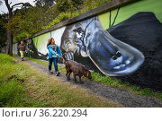 This mural next to the Yarra River which is a local hotspot for Platypus, and forms part of a broader 3 year 'Communities for Platypus program... Стоковое фото, фотограф Doug Gimesy / Nature Picture Library / Фотобанк Лори