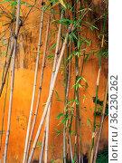 Abstract photo of bamboo plant in front of old house wall. Стоковое фото, фотограф Zoonar.com/Svetlana Radayeva / easy Fotostock / Фотобанк Лори