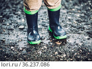 Close up on toddler wearing rubber boots in rainy weather. Стоковое фото, фотограф Zoonar.com/Tomas Anderson / easy Fotostock / Фотобанк Лори