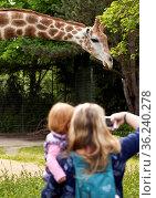 Mutter mit Tochter auf dem Arm macht ein Foto von einer Giraffe (... Стоковое фото, фотограф Zoonar.com/Stefan Ziese / age Fotostock / Фотобанк Лори