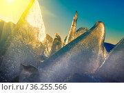 Young Toros. Ice Shine in the sun like jewels. Shooting in backlit... Стоковое фото, фотограф Zoonar.com/Maximilian Buzun / easy Fotostock / Фотобанк Лори