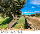 Stone wall on the pasture with holm oak and blue cloudy sky in Spain. Стоковое фото, фотограф Zoonar.com/Ana Maria Serrano / age Fotostock / Фотобанк Лори
