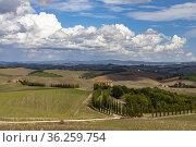 Typical Tuscan landscape in Val d'orcia, Italiy. Стоковое фото, фотограф Richard Semik / easy Fotostock / Фотобанк Лори
