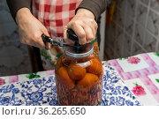 Женщина-садовод солит помидоры свежего урожая. Она закатывает их в стеклянные банки. Стоковое фото, фотограф Александр Бушков / Фотобанк Лори