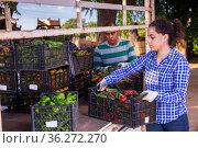 Female farmer loading truck with peppers in crates. Стоковое фото, фотограф Яков Филимонов / Фотобанк Лори