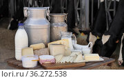 Various dairy products on table against background of cows in the barn. Стоковое видео, видеограф Яков Филимонов / Фотобанк Лори
