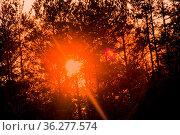 Magic evening light in the woods. dark and shadowy mystical forest... Стоковое фото, фотограф Zoonar.com/Maximilian Buzun / easy Fotostock / Фотобанк Лори