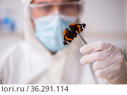 Young male chemist zoologist working at the lab during pandemic. Стоковое фото, фотограф Elnur / Фотобанк Лори