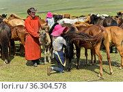 Junger Mann bringt Fohlen zur Beruhigung der Stute beim Melken, Mongolei... Стоковое фото, фотограф Zoonar.com/Georg / age Fotostock / Фотобанк Лори