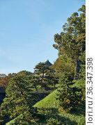 Thick greenery around the Edo castle wall. Tokyo Imperial Palace. Tokyo. Japan (2019 год). Стоковое фото, фотограф Serg Zastavkin / Фотобанк Лори